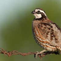 Quail and Pollinator Field Day