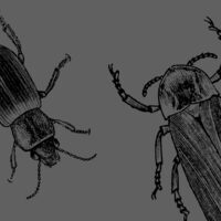 "Drawing Insects - ""The Life of a Dead Tree"""