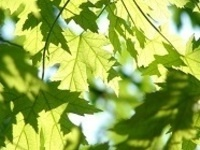 Yoga with Trees with Melissa Powell – June 2