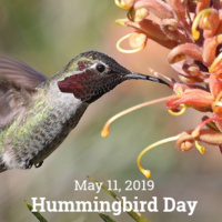 Hummingbird Day at UCSC Arboretum & Botanic Garden