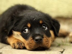 Taking Care of Your New Puppy: Presented by FurKids Animal Rescue