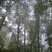 Woods Walk: Stone Lodge Trail