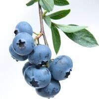Blueberry Awards-Redwood Staff