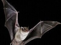 Beneficial Bats