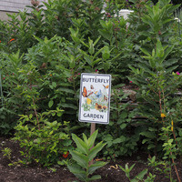 Planning and Planting a Butterfly Garden