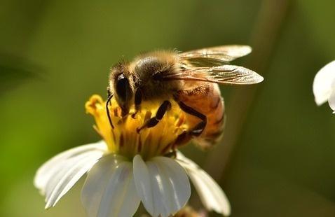 Toddler Trek Tuesday: Honeybee Hunt