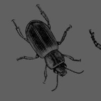 Drawing Insects - 'The Life of a Dead Tree'