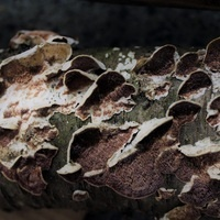Decomposers: Molds, Fungi, Mushrooms, Yeast | With in-museum scientist Alexandra Ntoukas