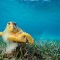 National Geographic Live! Ocean Soul | Zoellner Arts Center