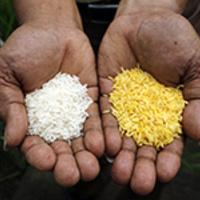 Nobel Laureate Richard Roberts Speaks about Golden Rice