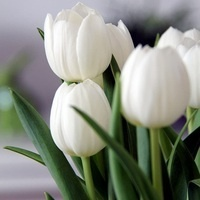 Please use tulip photo instead of infant photo.  This is a infant loss/remembrance ceremony and parents will be given a tulip bulb to plant to remember their baby.