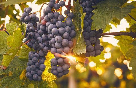 Crested Butte Food & Wine - Seminar: Weird Wines