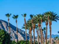 Palm Springs Unique Event: A wacky Let's Roam Adventure