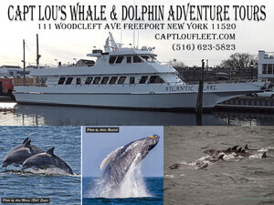 Captain Lou's Whale and Dolphin Tour