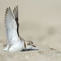 Naturalist Night: Coastal Conservation Through Citizen Science and Photography