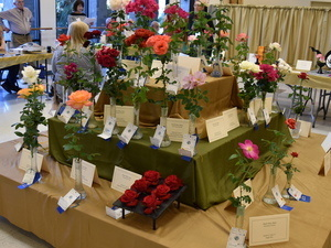 Annual Rose Show: Another Date in Palm Springs