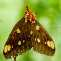 Moths!