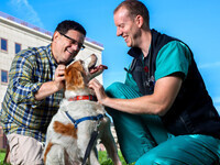 Vet LIVE: How Cornell cares for your pet