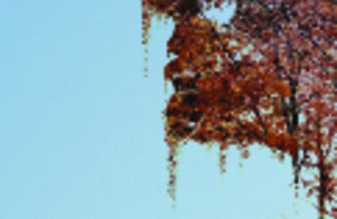 Audacious Autumn