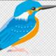 Heron and Kingfisher Paddle