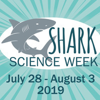 Shark Science Week 2019