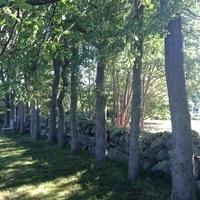 Arboretum Guided Tour