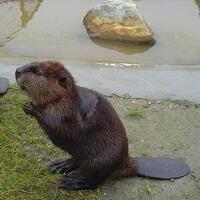 Beaver Pond Stroll