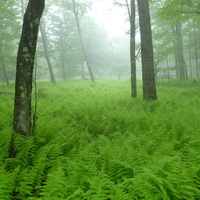 *FULL* Forest Bathing for Adults