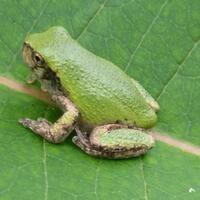 Amphibian Encounters