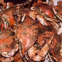Crab Feast Fundraiser