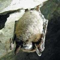 Bats of Cowans Gap