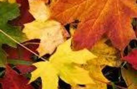 Autumn Leaves Suncatchers