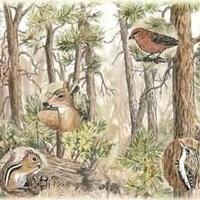 Forest Habitat Hunt