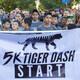 5K Tiger Dash and 1/2-Mile Cub Run