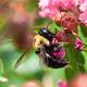 Gardening in St. Louis: Urban Pollinator Gardens