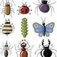 Science in the Park:  Insect Safari