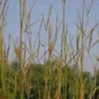 Center for Native Grasslands Management