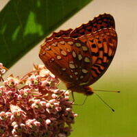 Learning at the Beach: Butterflies