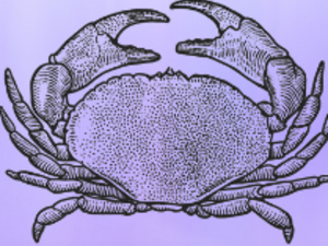 Join Mixolo: A.Y.C.E. Crab Feast to Support the American Cancer Society