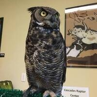 Raptors of Oregon: Successes and Concerns in a Changing World