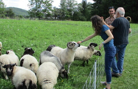 Open Farm Days 2019