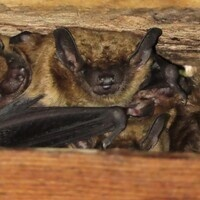 2019 Bat Count