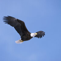 Rulers of the Sky: Eagles  & Ospreys