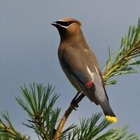 Bird Song Bingo