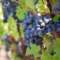 The Nexus of God & Grape