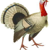 Thanksgiving Holiday - Museum Closed