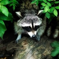 Science in the Park:  Animal Homes