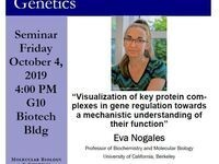 "MBG Friday Seminar: Eva Nogales - ""Visualization of key protein complexes in gene regulation towards a mechanistic understanding of their function"""