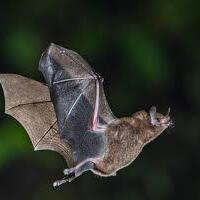 Bats Aloft