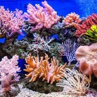 Explore the Reef Playtime